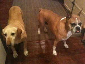 "Finnegan and Copper ~ ""The Geezers"""
