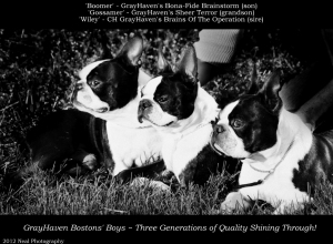 Boomer, Gossamer, & Wiley